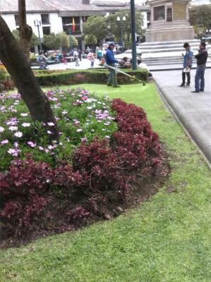 20141121182012-mantenimiento-plaza-grande-20-nov..jpg