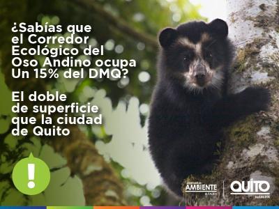 20151020231324-campana-osos-andinos-1.jpg
